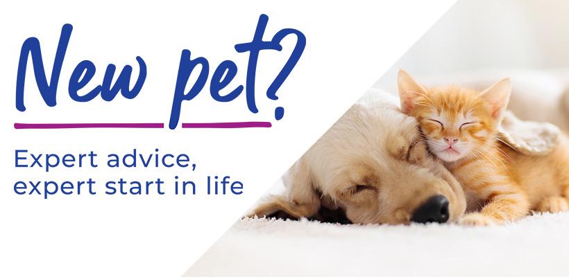 Puppy & Kitten Advice